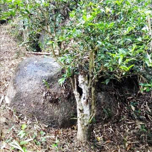Stone_legend_tree_rocks